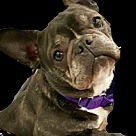 Adopt A Pet :: Nadia