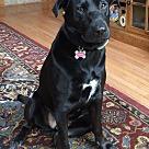 Adopt A Pet :: Harper