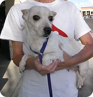 Dog Adoption Las Vegas Nv
