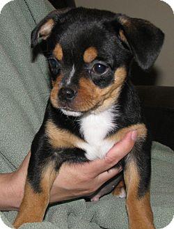 Adoption A Dog In Ohio
