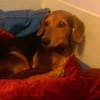 Adopt A Pet :: Logan - Visalia, CA