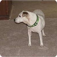 Jack Russell Terrier Mix Dog for adoption in Snellville, Georgia - Patty