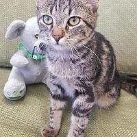 Adopt A Pet :: Toby - Saint Robert, MO