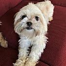 Adopt A Pet :: Chance - NO LONGER ACCEPTING APPLICATIONS!!!
