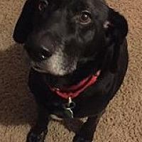 Adopt A Pet :: Shorty - Cross Roads, TX
