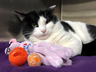 Adopt A Pet :: Baby  - Moose Jaw, SK