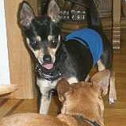 Puppies for Sale in Syracuse New York - Adoptapet com
