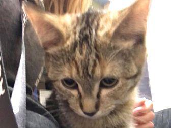 Adopt A Pet :: Sc: Taya  - Edmonton, AB