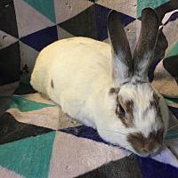 Adopt A Pet :: Judy - Idaho Falls, ID