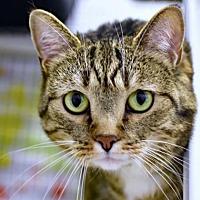 Adopt A Pet :: Melinda - Denver, CO