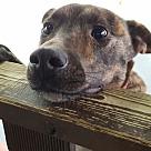 Adopt A Pet :: HARLY