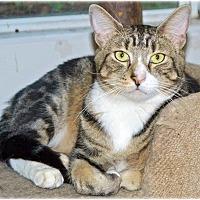 Adopt A Pet :: Noogie - Huntington, NY