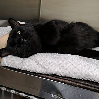 Adopt A Pet :: Samson  - Moose Jaw, SK