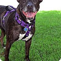 Adopt A Pet :: Camry - Irving, TX