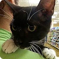 Adopt A Pet :: Harrison - Hallandale, FL