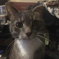 Adopt A Pet :: Eeyore (COURTESY POST) - Baltimore, MD