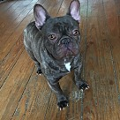 Adopt A Pet :: Teddy