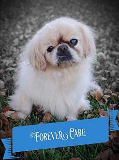 Adopt A Pet :: Forever Care Program: Bailey  - Santa Clara, CA