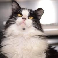 Adopt A Pet :: Floofers - New Freedom, PA