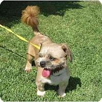 Adopt A Pet :: Max - Riverside, CA