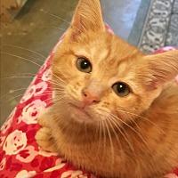 Adopt A Pet :: Skeeter - Butner, NC