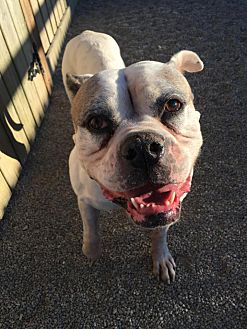 Adopt A Pet :: Layla  - Wilmington, OH
