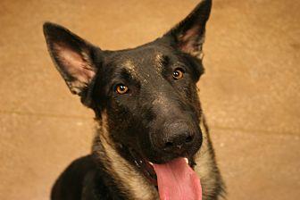 Dog Adoption Louisville Kentucky