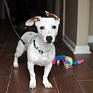 Adopt A Pet :: CAJUN