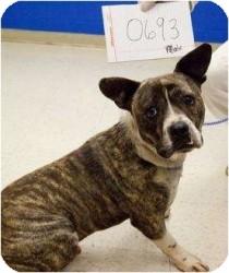 Hope Dog Rescue Albany Ny