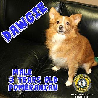 Adopt A Pet :: Dawgie  - Nicholasville, KY