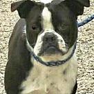 Adopt A Pet :: Victoria