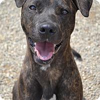 Adopt A Pet :: Sunflower - Toledo, OH
