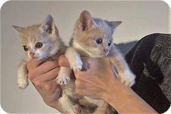 Where To Adopt Cats Royal O