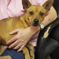 Adopt A Pet :: Sweetie - Livingston, TX