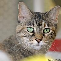 Adopt A Pet :: Goldenrod - St Louis, MO