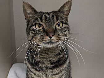 Adopt A Pet :: Olive  - Laramie, WY