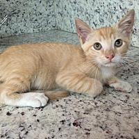 Adopt A Pet :: Mango - Sunny Isles Beach, FL