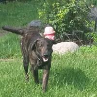 Adopt A Pet :: Buddy - Woodstock, ON
