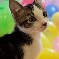 Adopt A Pet :: Lexi - Oviedo, FL