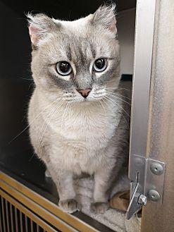 Adopt A Pet :: Scout  - Moose Jaw, SK
