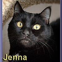Domestic Shorthair Cat for adoption in Aldie, Virginia - Jenna