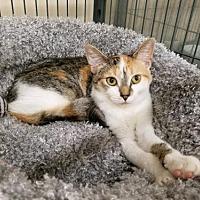 Adopt A Pet :: AUTUMN - Smithtown, NY