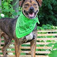 Adopt A Pet :: Jeremy - Whites Creek, TN