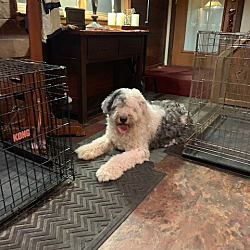 Adopted pets at Shaggy Dog PA in Allentown, Pennsylvania