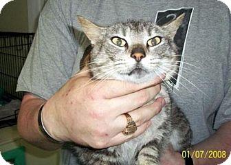 Domestic Shorthair Cat for adoption in Marble, North Carolina - Nina