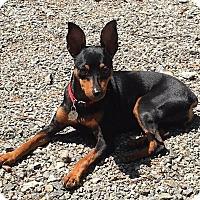 Adopt A Pet :: Minnie - Atlanta, GA