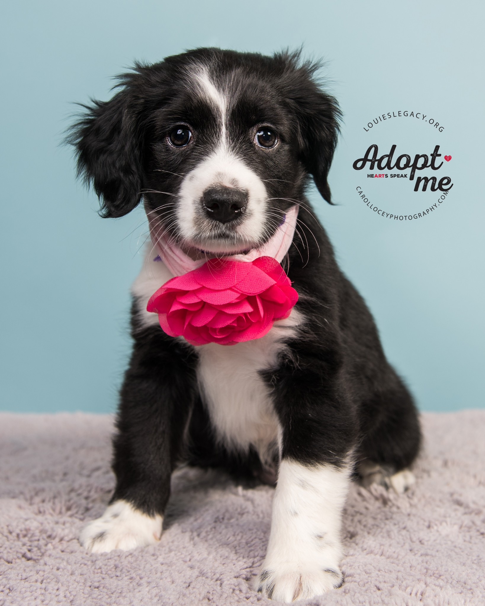 Cincinnati, OH - Pointer. Meet Pecan Sandie a Dog for Adoption.