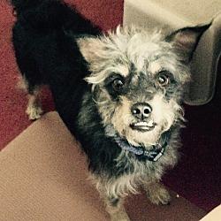 Puppies for Sale in Jacksonville Florida - Adoptapet com