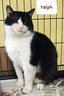 Adopt A Pet :: Ralph  - Mt Vernon, IN