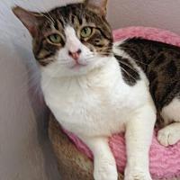 Adopt A Pet :: TC - Alamogordo, NM